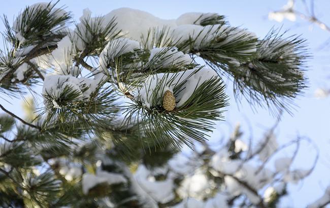 Погода на сегодня: в Украине без осадков, температура от -7 до +6