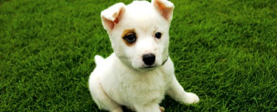 Зоомагазин для домашних животных