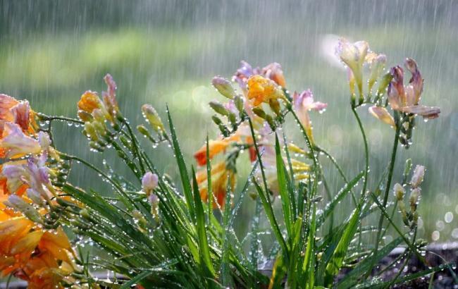 Погода на сегодня: в Украине местами дожди, температура до +35