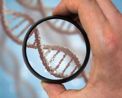 Где сделать ДНК тест в Киеве?