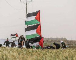 На границе сектора Газа и Израиля погибли 2 палестинцев