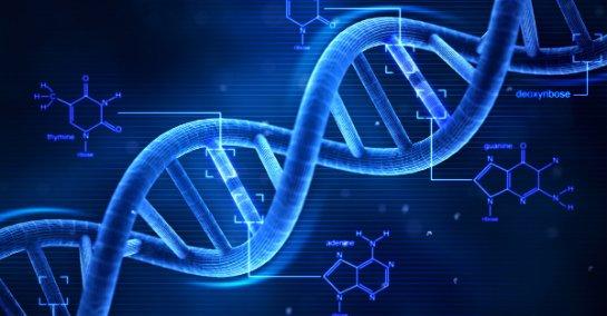 Точный тест ДНК для выявления родства по материнской линии