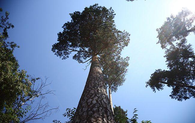 В Украине запретили высаживать деревья вплотную к соседнему участку