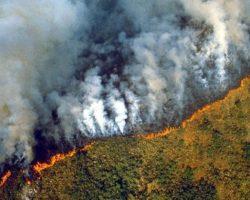 Евросоюз может отложить торговое соглашение с Бразилией из-за лесных пожаров
