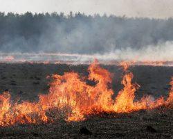 В Полтавской области горели почти 50 га сухой травы