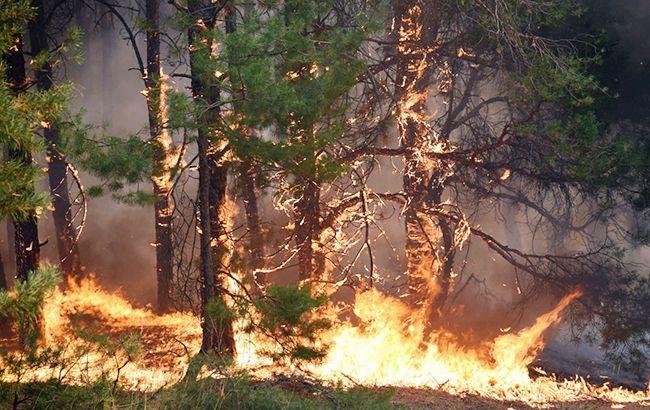 Синоптики предупредили о пожарной опасности в Украине
