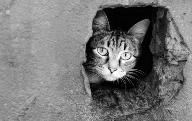В Виннице на пять лет посадили мужчину за жестокое обращение с кошкой