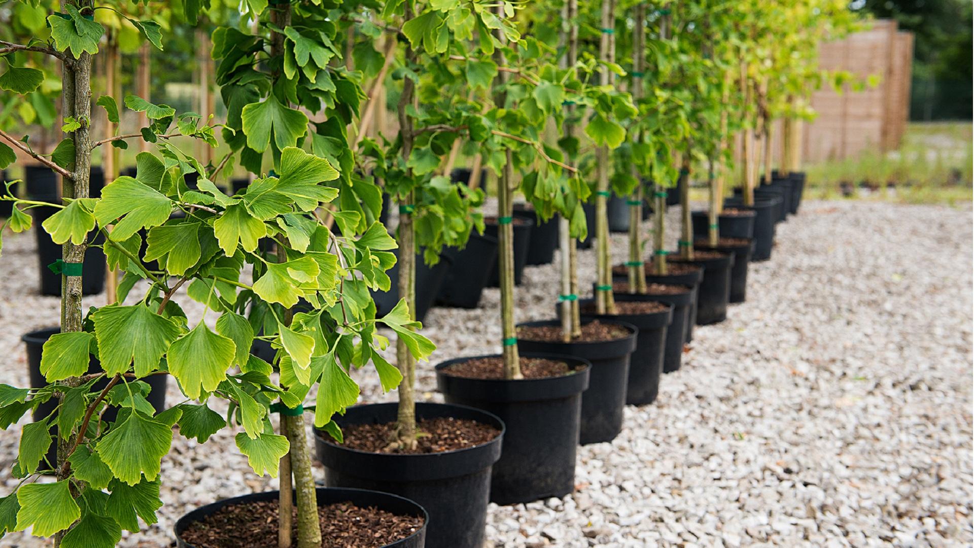 Prolisok – место для покупки ваших саженцев и растений