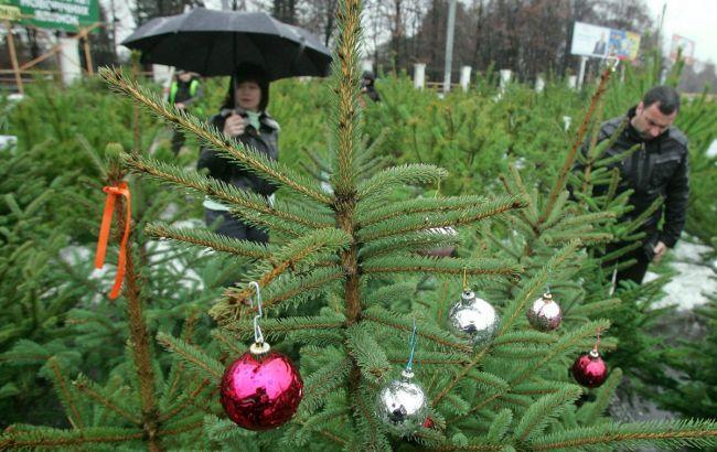 В Киеве заработали пункты сбора новогодних елок: адреса
