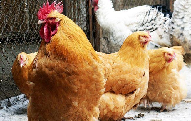 В Китае зафиксировали вспышку птичьего гриппа H5N1