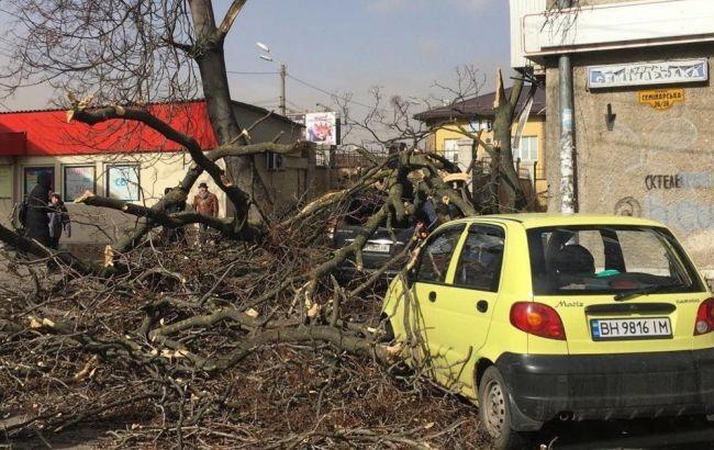 В Одессе ветер повалил десятки деревьев, не ходят трамваи