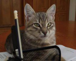 В Ухане нашли коронавирус у 15% кошек