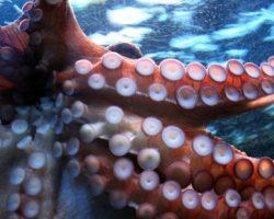 В Китае обнаружили коронавирус на упаковке морепродуктов из РФ