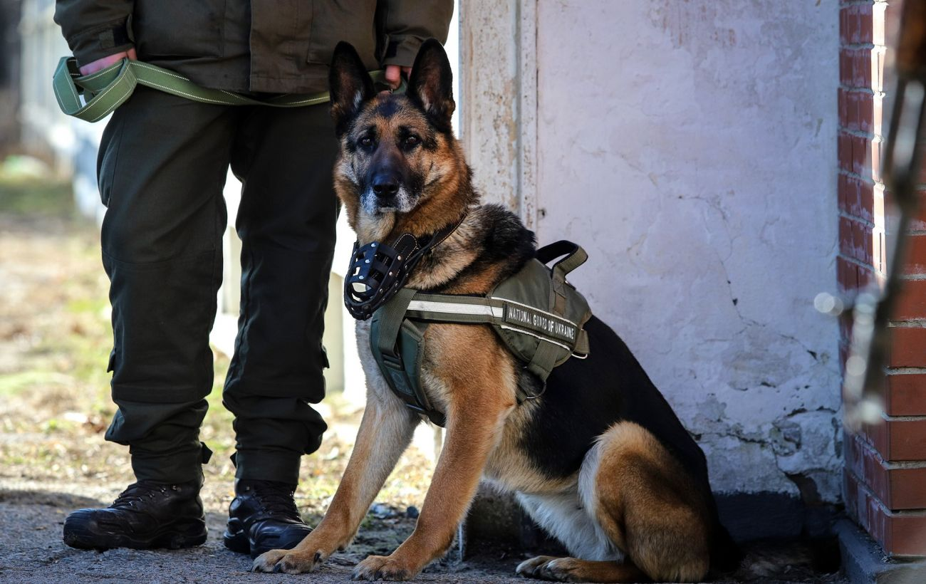 В Украине для выявления больных коронавирусом могут использовать служебных собак