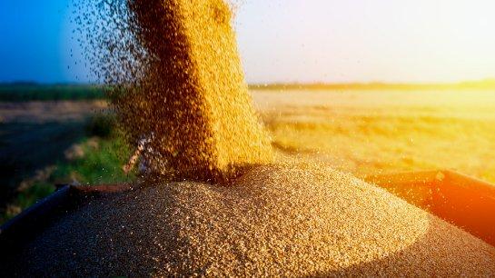Замечено падение объемов экспорта пшеницы и кукурузы из Украины в 2020 году