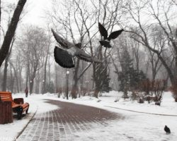 Потепление в Украине начнется на следующей неделе: названа дата