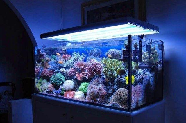 Магазин для любителей морских аквариумов