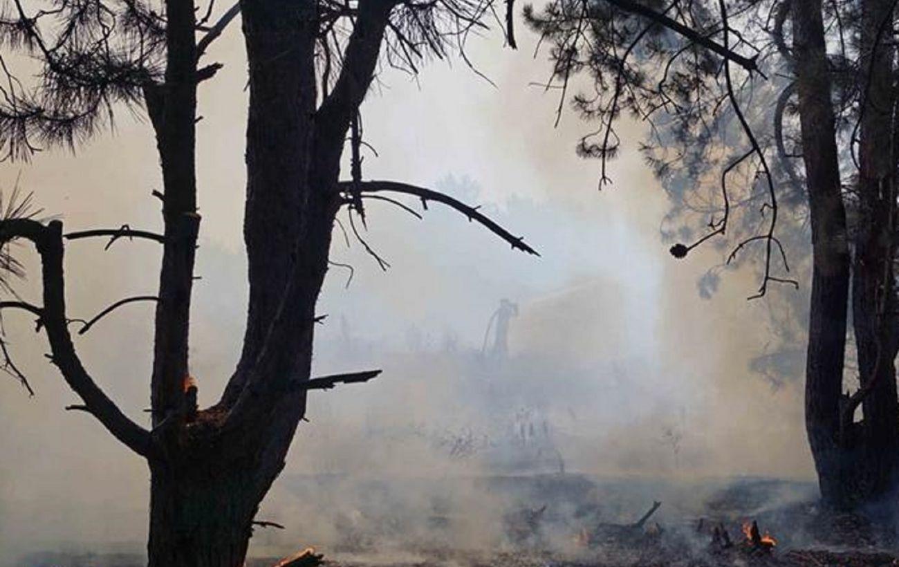 Пожар на Хортице: директор заповедника назвал вероятной версию о поджоге