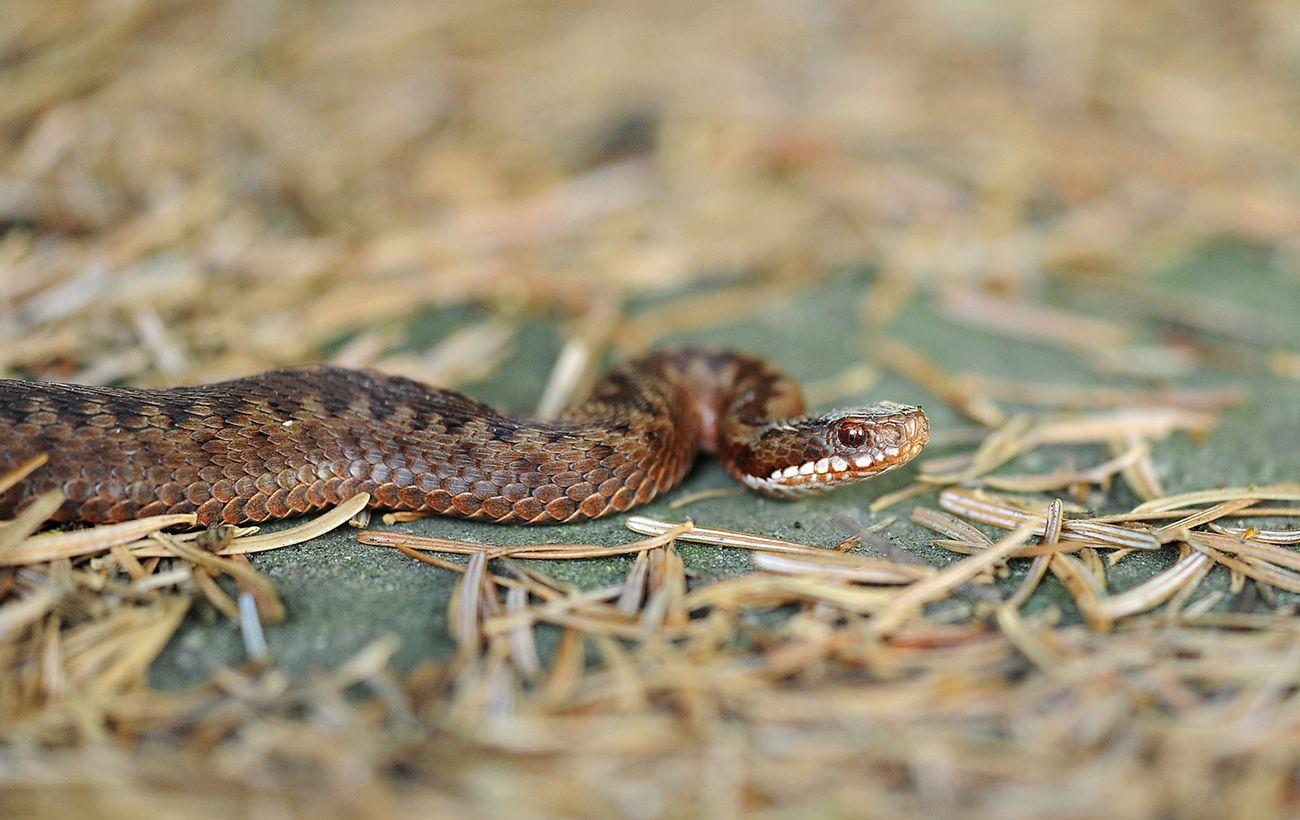 В Ивано-Франковской области госпитализировали троих детей с укусами змей, они в реанимации