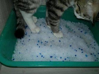 Наполнитель для котов силикaгелевый — как пользоваться