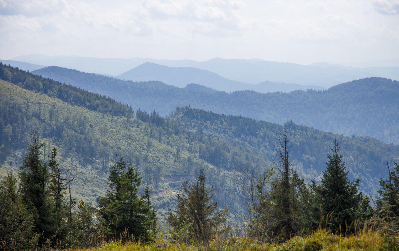 Украина до конца года может отменить мораторий на экспорт леса, - Гослесагентство